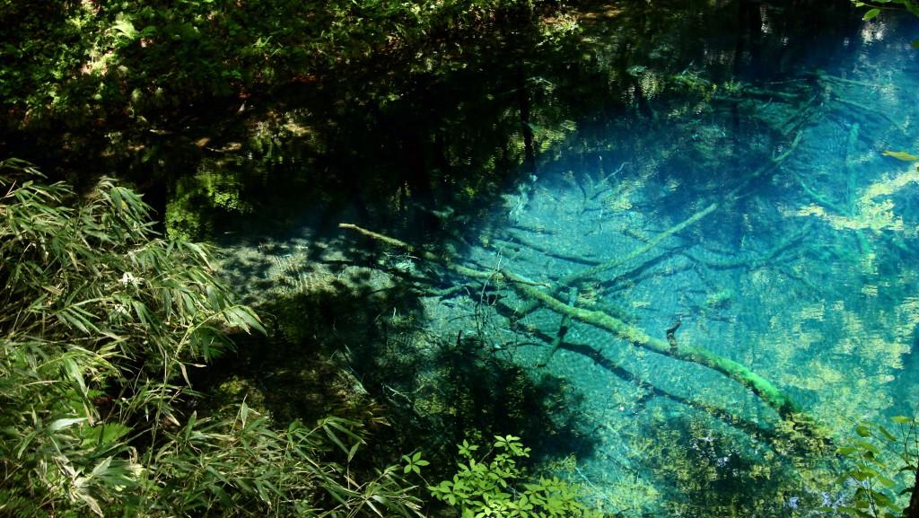 【日本一周】十二湖の絶景!サファイアブルーの宝石「青池」を訪れる。美しすぎて震えた・・・。
