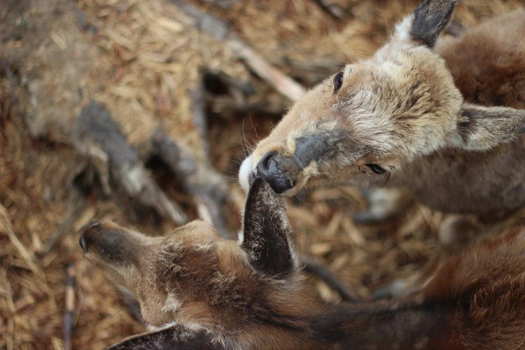 【日本一周】日本一の動物園・旭山動物園へ。明確な経営哲学を持ち、V字回復させた動物園の魅力。