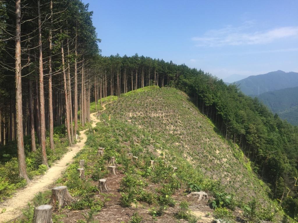 【四国遍路12日目】標高750m、横峰寺へ挑戦!【第61番札所〜第60番札所】