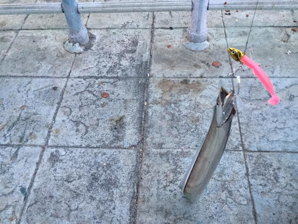 ポートアイランド北公園にタチウオ(太刀魚)調査!ワインド釣法でリベンジマッチ!