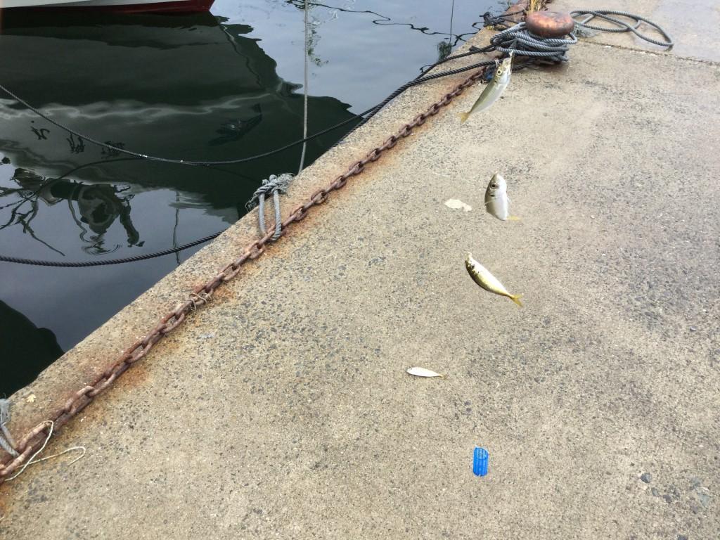 【明石・垂水】塩屋漁港でサビキ釣り!豆アジ・イワシが100匹近く爆釣!