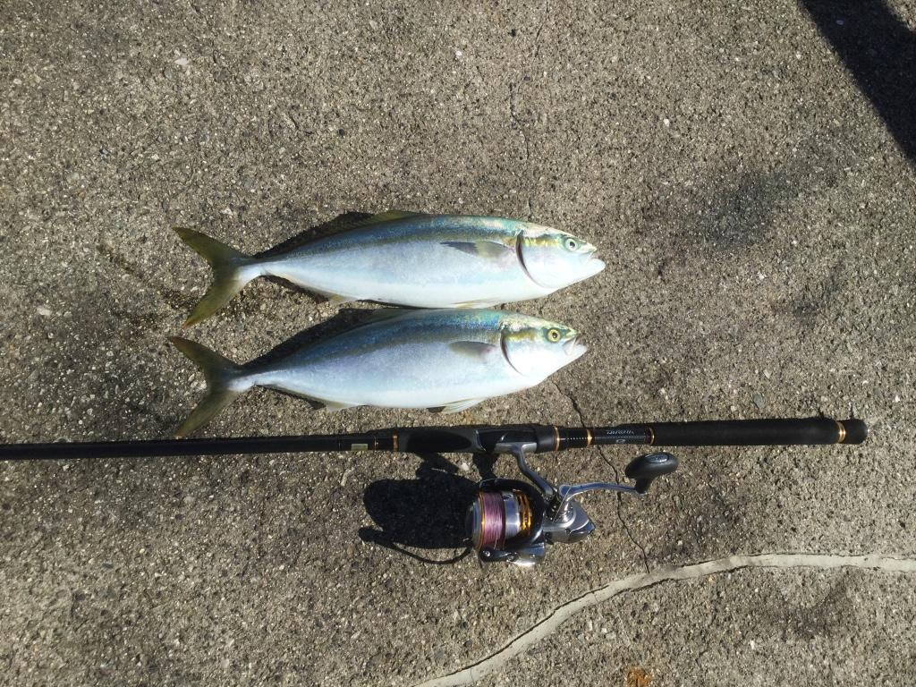 【ライトショアジギング入門】初心者でも青物が釣れる!タックル選びから釣り方まで徹底解説