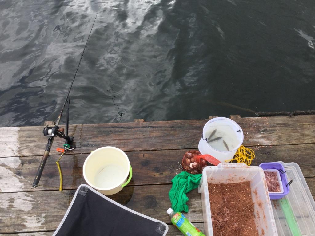 筏釣り初心者が京都・久美浜湾でチヌを狙ってみた!