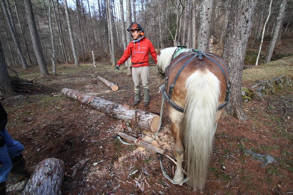 これからの林業は、馬で木材を搬出する「馬搬」だ!循環型・自給型社会を目指すために。