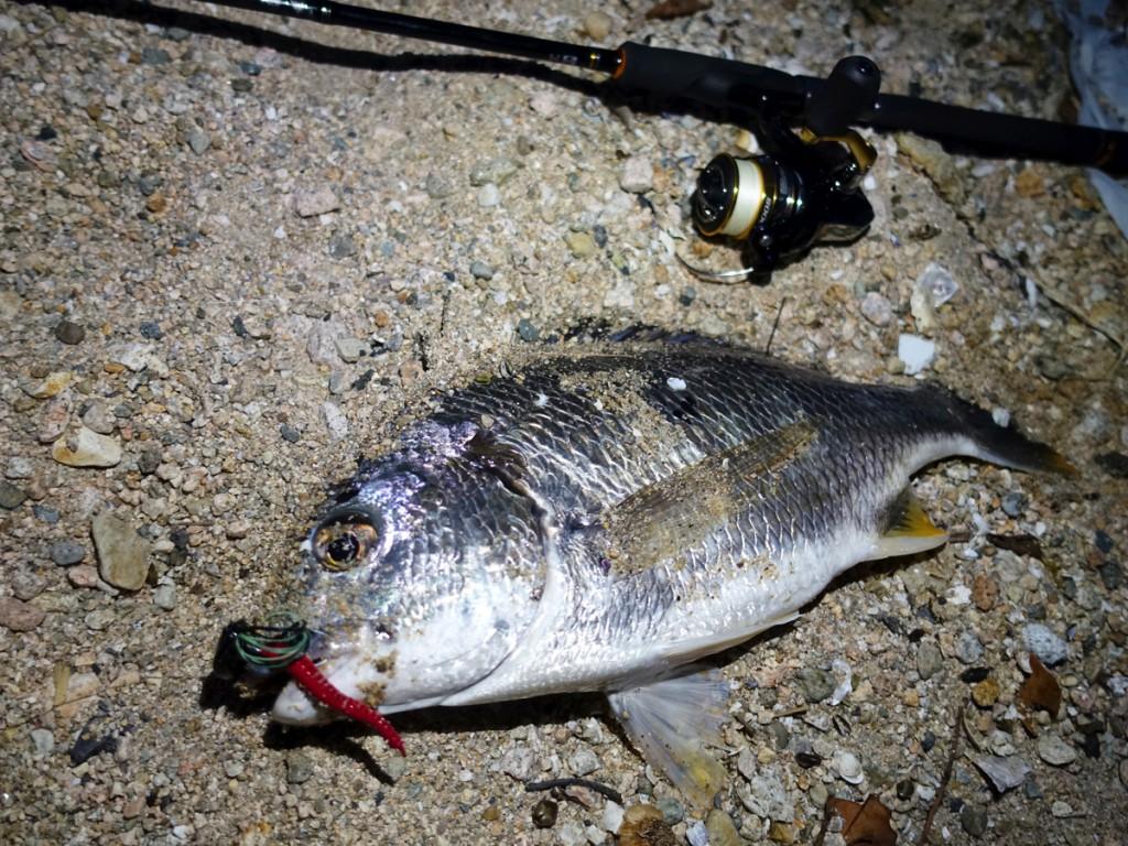 【チニング】どうしても釣れないときの対処法!上手く魚を引き出すコツ・極意