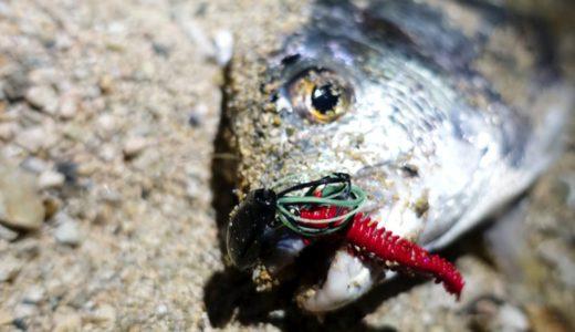 実績抜群!チニングでよく釣れるおすすめの「底ズル系ルアー」紹介