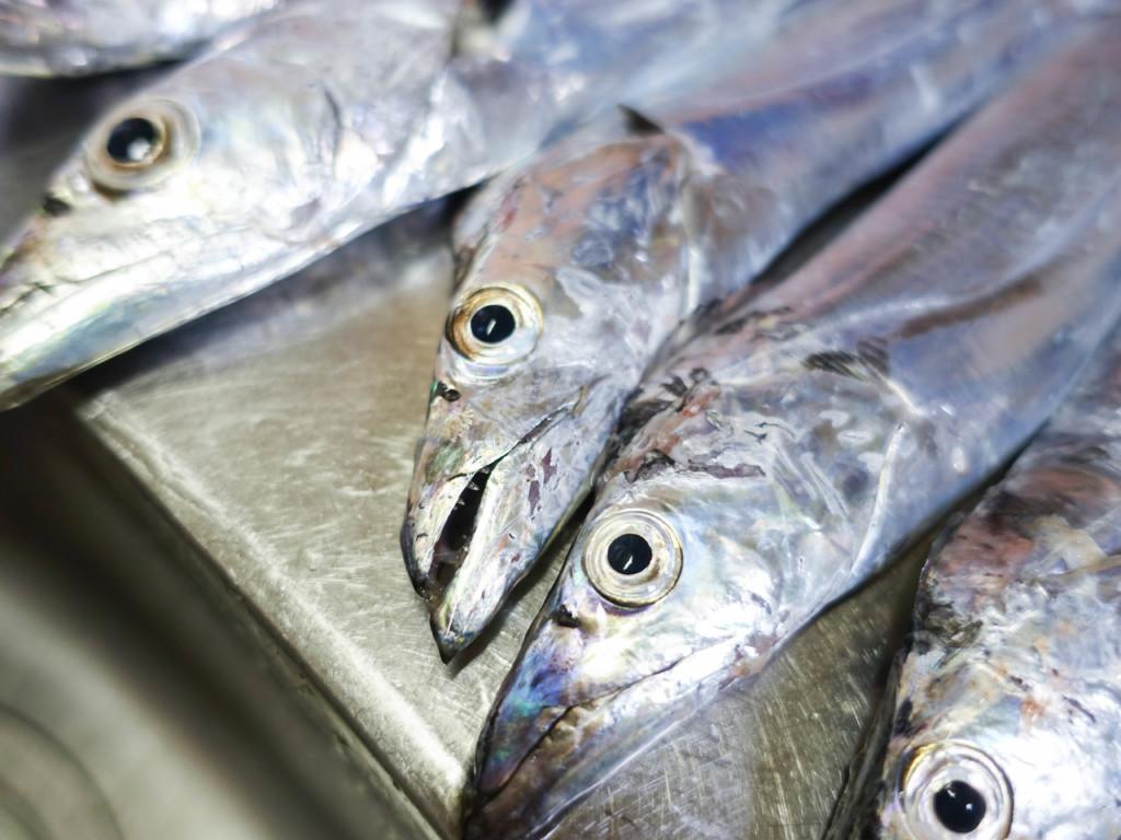 簡単にタチウオが爆釣!?ワインド釣法のコツとタックルについて【釣り方解説】