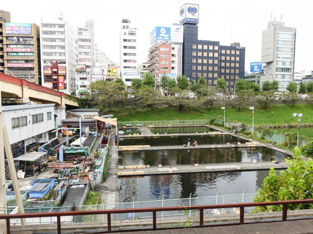 東京都心で釣りができる!「市ヶ谷フィッシュセンター」で鯉釣りを楽しんできた