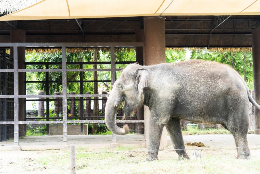 タイ・バンコク市内で動物観察!「ドゥシット動物園」が想像以上に豪華だった!