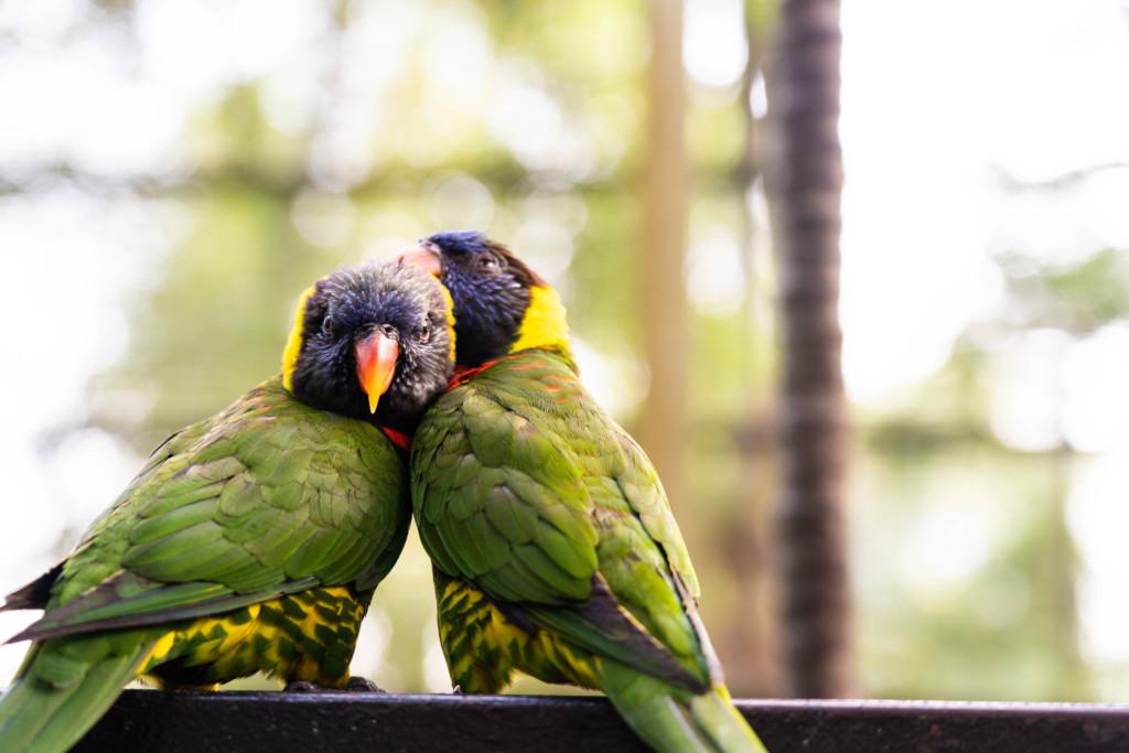 【クアラルンプール観光】KLバードパークで約5000羽の鳥たちと触れ合ってきた【アクセス・入場料金・所要時間】